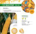 Nasiona kukurydzy SY Multitop (FAO 240)