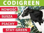 Nasiona kukurydzy CODIGREEN FAO 250
