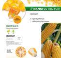 Nasiona kukurydzy Rianni CS (FAO 230-240)
