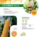 Nasiona kukurydzy Es Cirrius (FAO 230)