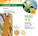 Nasiona kukurydzy Codilio (FAO 250) IGP POLSKA