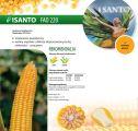 Nasiona kukurydzy Isanto (FAO 220) Saatbau Linz
