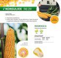 Nasiona kukurydzy Konsulixx (FAO 230) RAGT