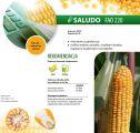 Nasiona kukurydzy Saludo (FAO 220)