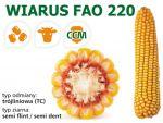 Nasiona kukurydzy Wiarus FAO 220,
