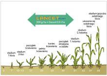 LANCET PLUS 125 WG 0,2 kg + DASSOIL 0,5L  DOWAGRO