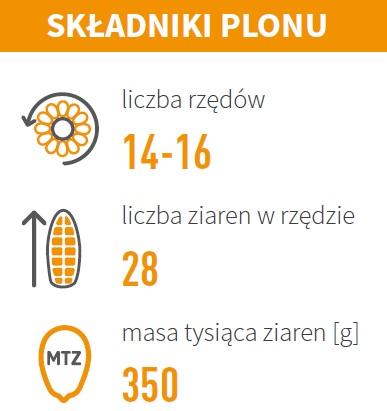 Nasiona Kukurydzy ES Tolerance FAO 240-250 Agrosimex